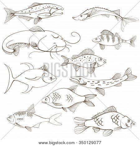 Fishes, Line Art. Fishing Vector Illustration. Isolated On White.