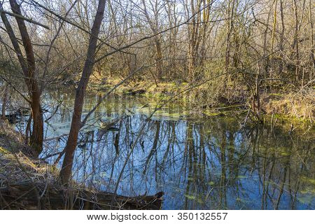 Early Spring In The Forest Swamp. Marshland. Reflection Of Tree Trunks In The Water On A Sunny Day.