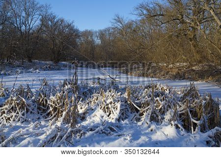 Winter In The Forest Swamp. Frozen Swamp Surrounded By Bare Trees And Reeds, Covered In Snow. Winter