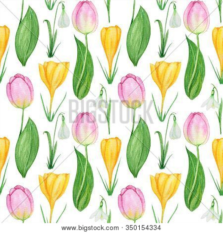 Seamless Pattern With Snowdrop Crocus And Tulip Spring Easter Flowers With Green Leafs. Hand Painted