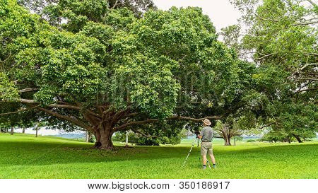 A Male Caucasian Retiree Photographing A Fig Tree Growing In Beautiful Green Parkland On A Hot Sunny
