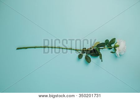 Spring Freshness Card With One Flower. White Rose With Green Leaves And Long Stem On Blue Background