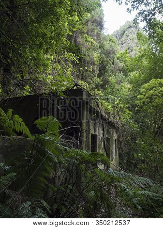 Old Run-down Overgrown Ruin Of Maintenance House At Mysterious Laurel Forest, Lush Subtropical Rainf
