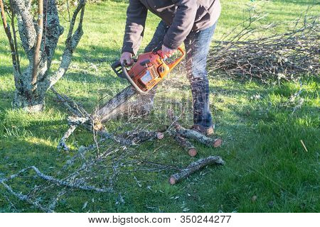 Lumberjack Cutting Branch With A Chain Saw After Trimming A Tree