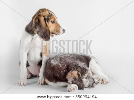 Pair Of Young Mutt Puppies Isolated On White Background