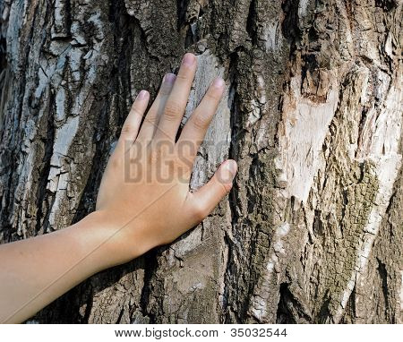 hand is located on an old tree