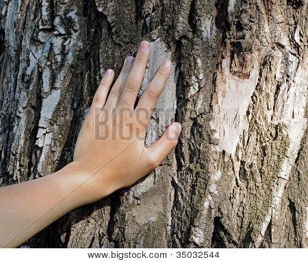Hand befindet sich auf einem alten Baum