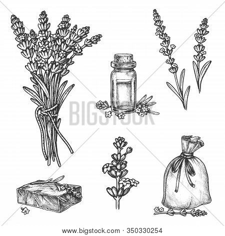 Lavender Vector Sketch Botanical Illustration Of Aromatherapy Essential Oil, Herbal Soap And Perfume