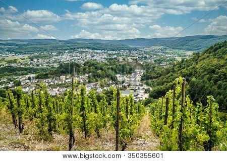Beautiful Vineyard  On Moselle In Trittenheim Germany