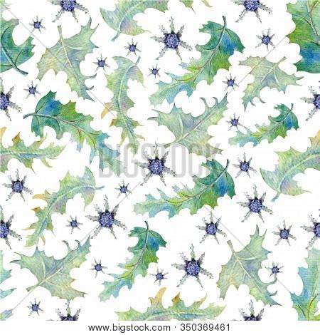 Seamless Pattern With Prickly Thistle Leaves. Field Plants In Watercolor. Vector