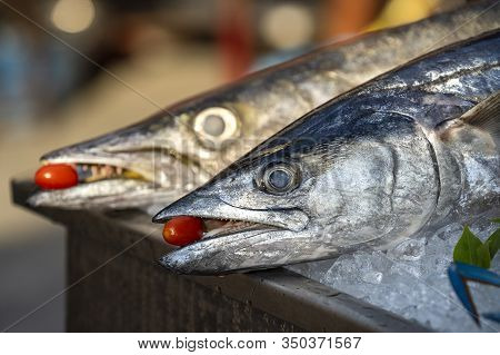 Close Up On Barracuda Teeth With Red Tomato. Sea Fresh Fish Barracuda At Street Food Market In Thail