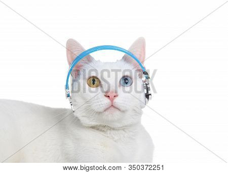 Portrait Of A White Cat With Heterochromia, Odd-eyes, Wearing Headphones Looking Up. Isolated On Whi