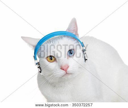 Portrait Of A White Cat With Heterochromia, Odd-eyes, Wearing Headphones Looking At Viewer, Ears Bac