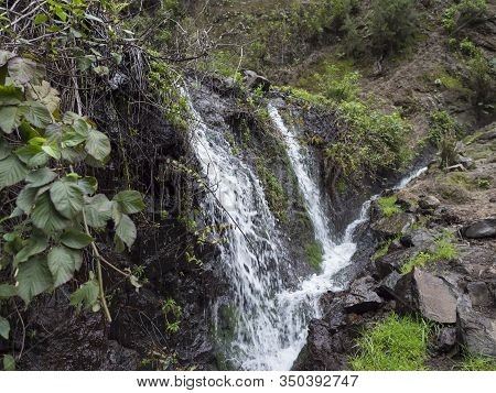 Small Waterfall At Mysterious Laurel Forest Laurisilva, Lush Subtropical Rainforest At Hiking Trail