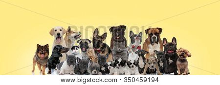 family of different breeds of animals panting, sticking out tongue, licking nose and wearing bowtie on yellow background
