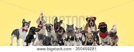 group of different animals panting, sticking out tongue, licking nose and wearing bowties and hats on yellow background