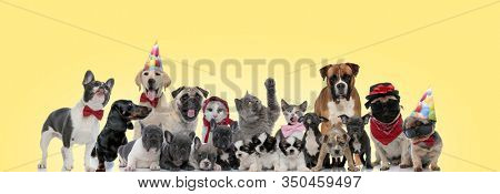 team of different animals panting, sticking out tongue, wearing glasses, hats and bowties on yellow background