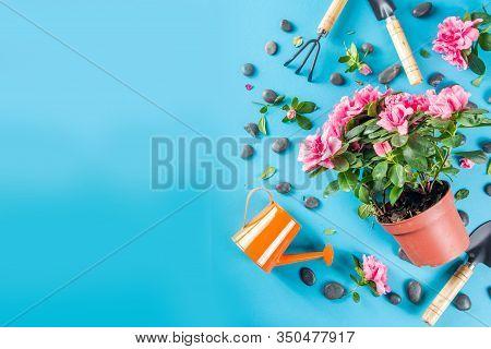 Home Gardening Flatlay