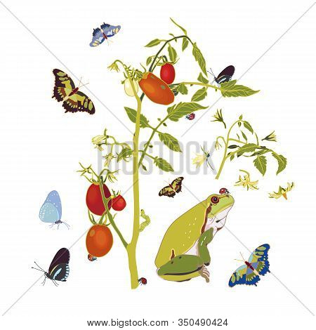 Vector Realistic Tomato Garden Illustration Set With Tomato Plant, Frog And Butterfly. Beautiful Sum