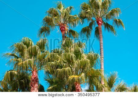 Palm trees grove against cyan sky. Cinematic colors palette
