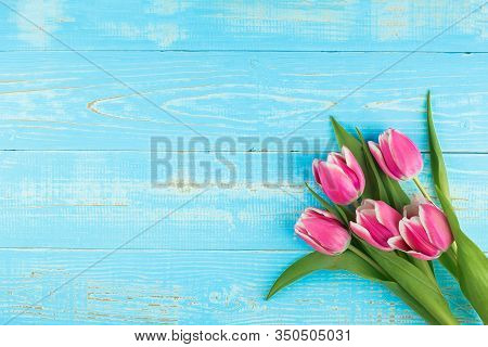 Pink Tulip Flower On Blue Wood Table Background With Copy Space For Text. Love, International Women