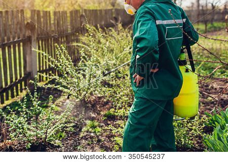 Farmer Spraying Bush With Manual Pesticide Sprayer Against Insects In Spring Garden. Agriculture And