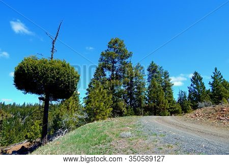 Hash Tag Road - Fr 350 On The Way To The Top Of Hash Rock - Ochoco Mountains - Northeast Of Prinevil