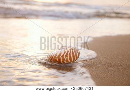 nautilus sea shell on golden sand beach with waves in  soft sun light, shallow dof