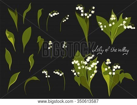Set Of Lilies Of The Valley. Vector Image.