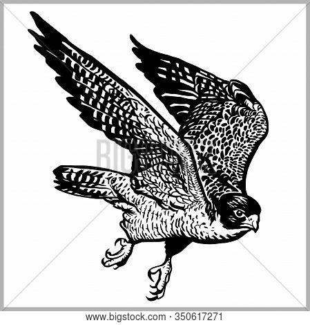 Hawk In Flight Vector. Predatory Bird Isolated On White.