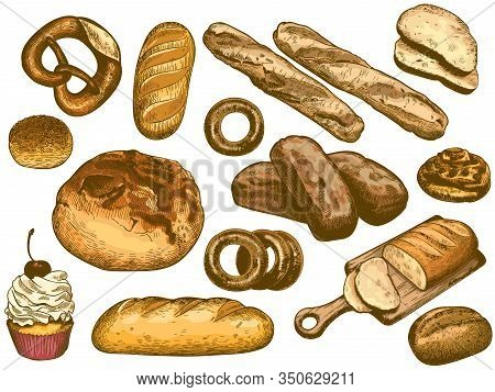 Color Hand Drawn Bread. French Loaf, Fresh Bakery Donut, Sesame Bun And Pretzel Vector Illustration