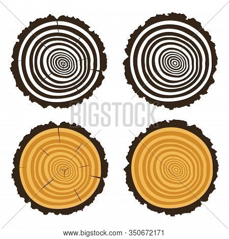 Vector Wooden Cut Of A Tree Log With Concentric Rings And Bark, Trunk Section Texture With Rough Cir