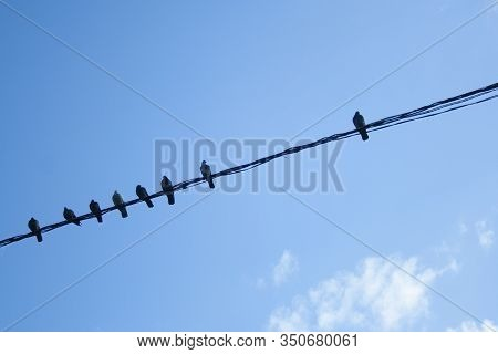 Individuality Concept, Independent Thinker Symbol, Many Pigeon Birds On A Wire With One Individual I