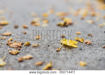 Fallen Leaves With Yellow Tones From A Maple Tree On Concrete