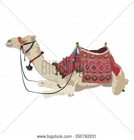 Arabian One-humped Camel Dromedary With Bridle And Saddle, Vector Illustration Isolated On White Bac