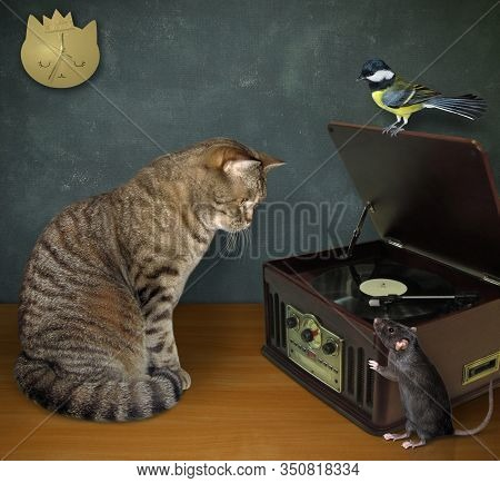The Beige Cat And Black Rat Are Sitting Near A Turntable Vinyl Record Player With A Radio  Tuner. Th