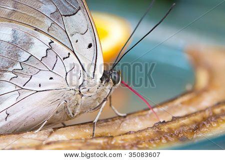 Beautiful Butterfly closeup