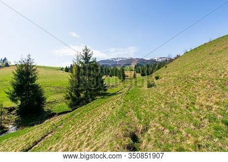 Valley Of Borzhava Mountain Ridge In Springtime. Small Brook Among Spruce Trees On The Green Grassy