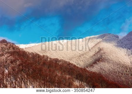 Winter Landscape In Mountains. Stunning View With Forested Slopes. Leafless Trees In Snow And Hoarfr