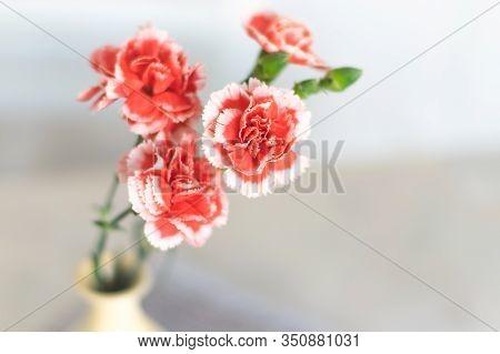 Vase Of Flowers Background. Vase With Flowers On White Background. Background Image Of Flowers In Va