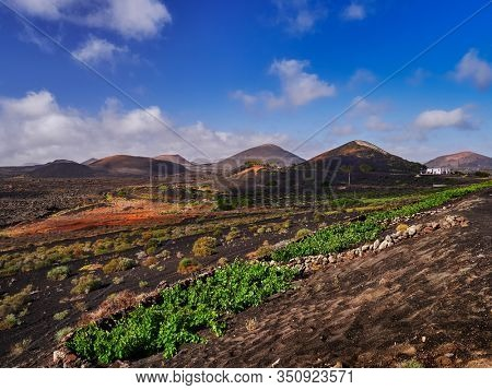 famous vineyards in the region of La Geria on volcanic soil in Lanzarote Island, Canary islands, Spain