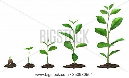 Realistic Plant Growth Stages. Young Seed Growing In Ground, Green Plants In Soil, Spring Sprout Blo