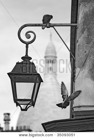 Montmartre Pigeons