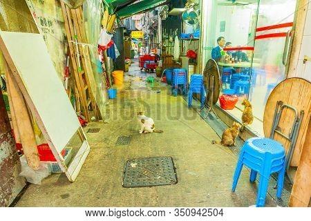 Hong Kong, China - December 5, 2016: Stray Cats Looking At A Chinese Restaurant Window For Food. Tem
