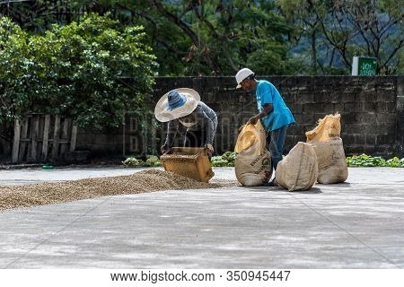 January 20, 2020 San Jose De Ocoa, Dominican Republic.  Dramatic Image Of Two Workers Bagging Coffee