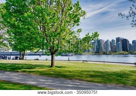 Vancouver - May 06 2019: Downtown Vancouve, Canada.view Of Downtown Vancouver, Tree In Foreground, F