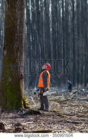 Lumberjack Holding Chainsaw And Looking At Big Tree Marked For Cutting