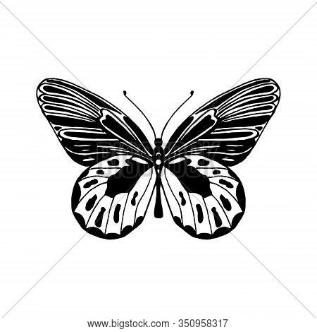 Vector Illustration Of Winged Insects. Hand Drawn Butterfly. Entomology Sketch Isolated On White. Bl