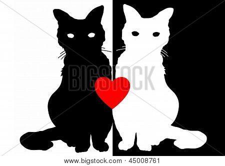 Yin Yang Cat Illustration