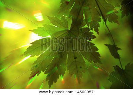 Summer Forest, Rainbow Rays